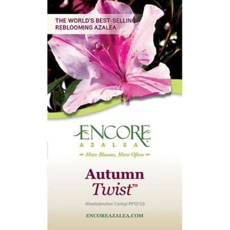 Encore Azalea Autumn Twist