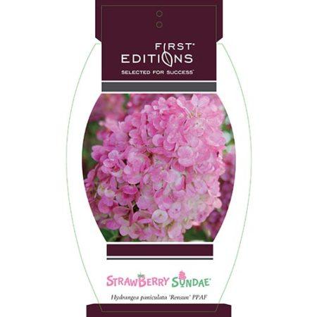 First Edition strawberry Sundae Hydrangea