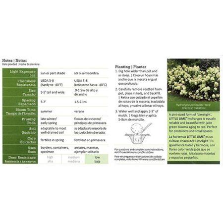 Proven Winner Hydrangea Little Lime