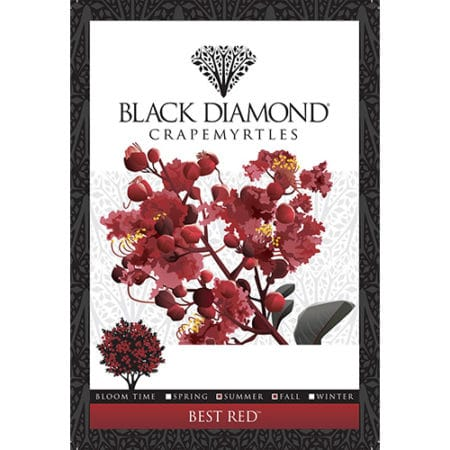 Black Diamond Crepe Myrtle tag front