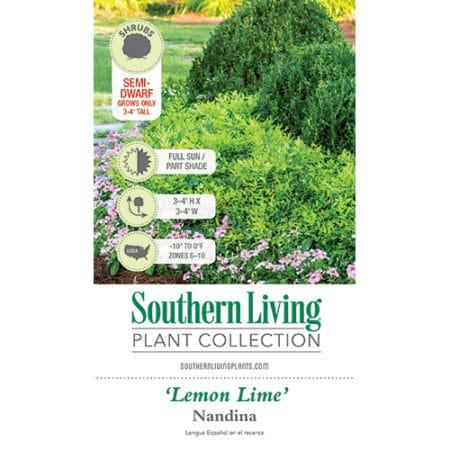 Southern Living Nandina Lemon Lime